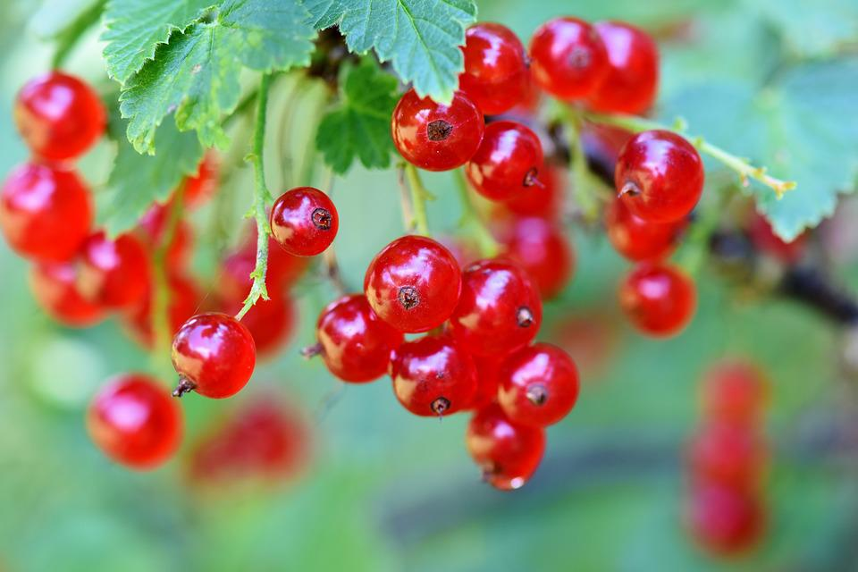 Currants, Berries, Currant, Fruits, Food, Fruit, Tasty