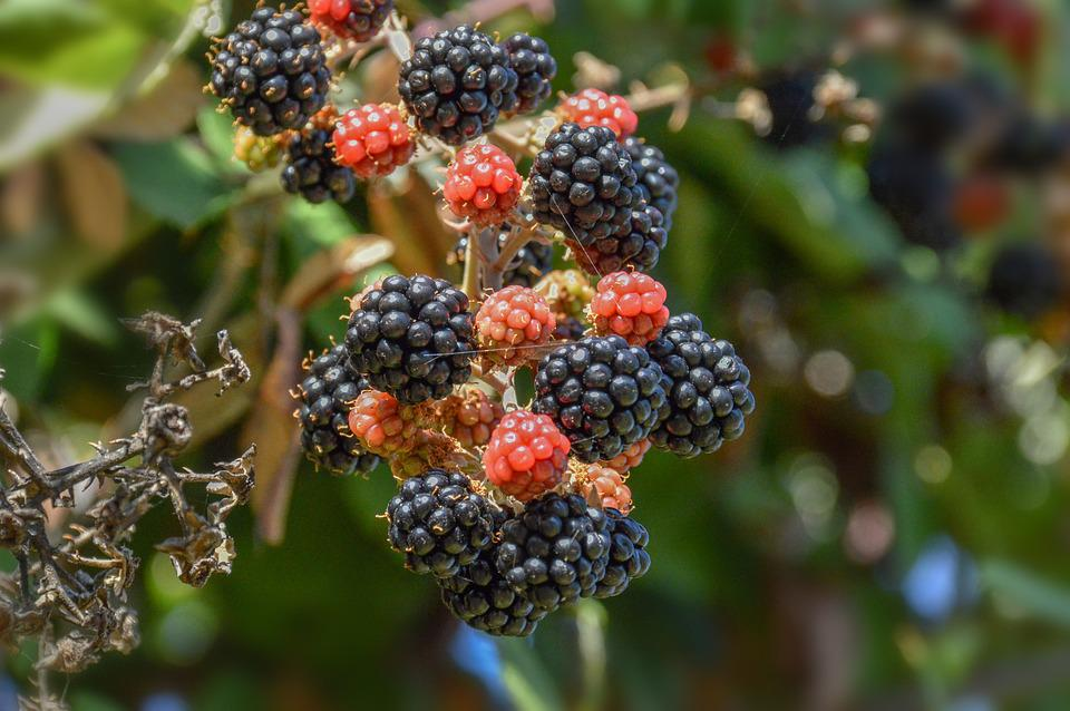 Fruit, Nature, Food, Leaf, Outdoors, Berry, Closeup