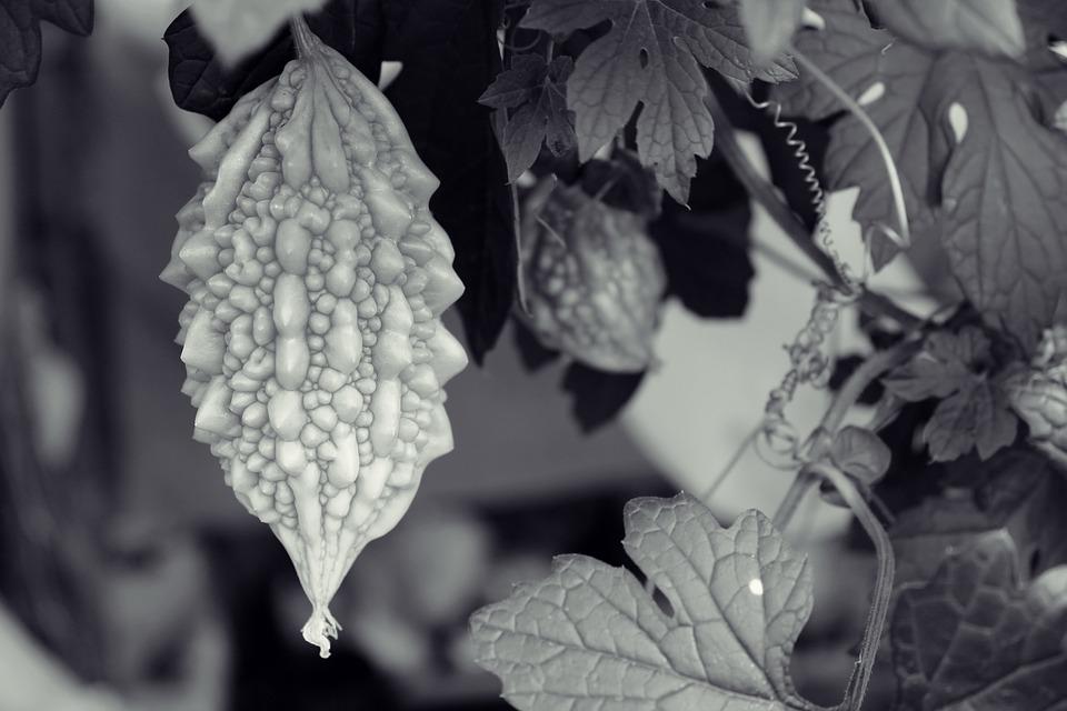 Momordica, Plant, Fruit, Leaves, Berry, Green, Fresh