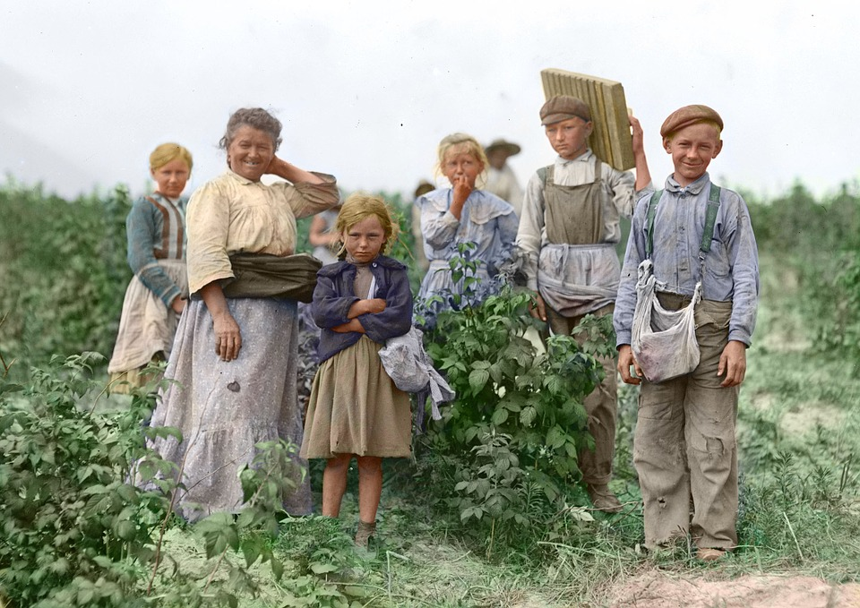 Harvest, Pickers, Poland, Berry Pickers, Hand Labor