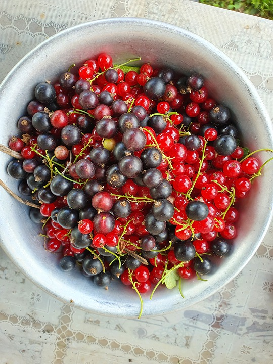 Currant, Berry, Bowl, Black, Red, White, Summer, Dacha