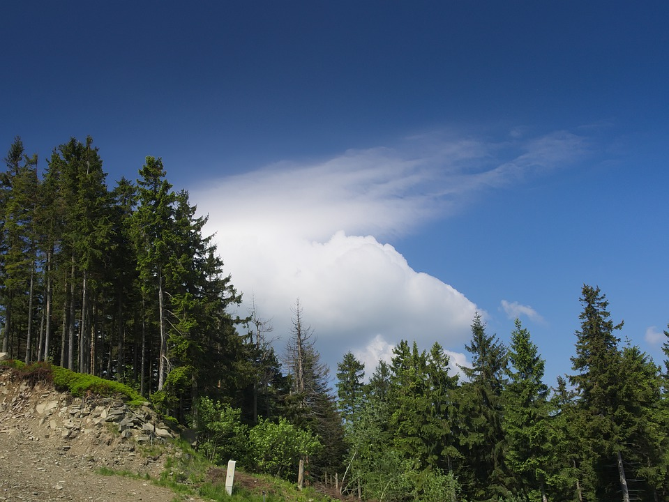 Cloud, Mountains, Forest, View, Landscape, Beskids