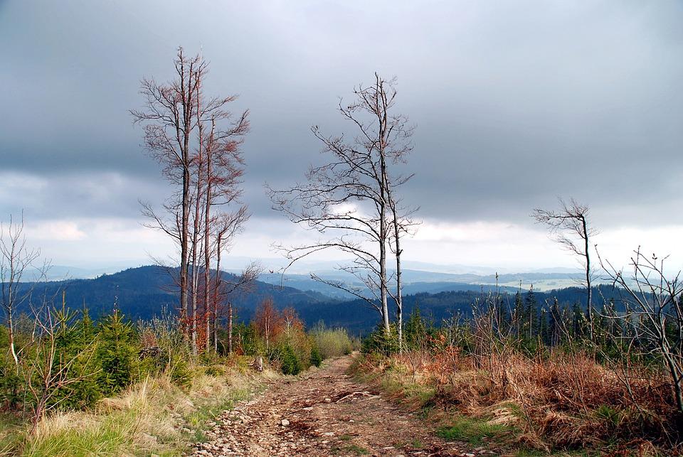 Mountains, View, Landscape, Poland, Beskids, Tree