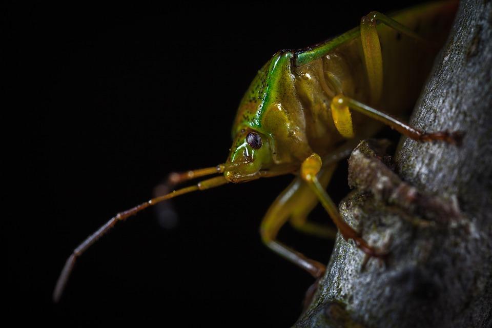 Insect, Bespozvonochnoe, Living Nature, Nature, Animals