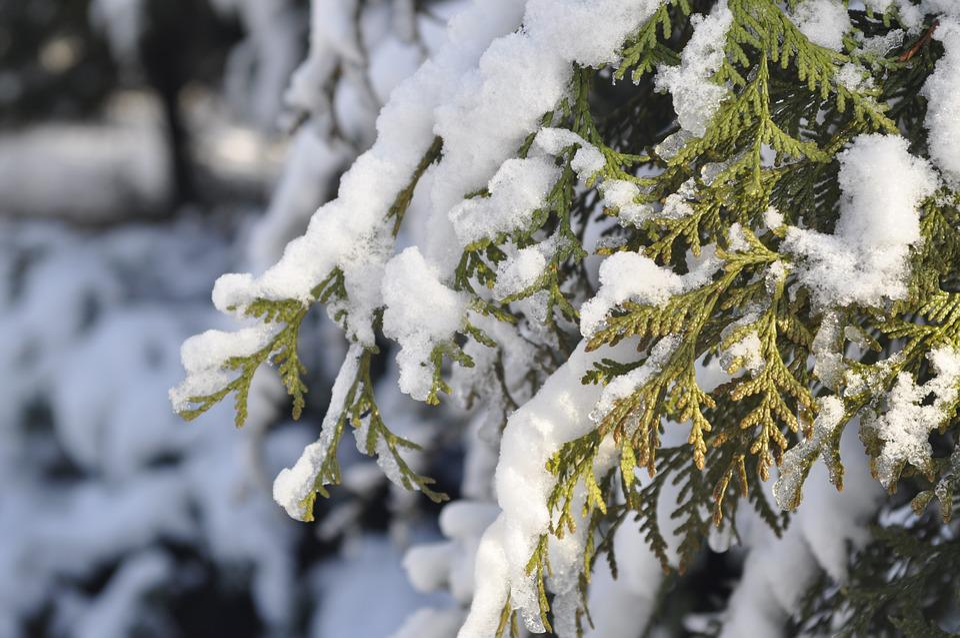 Winter, Snow, Branch, Frost, Tree, Biel, Garden