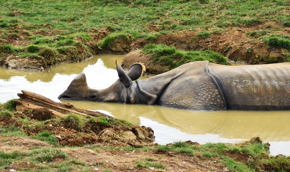Rhino, Africa, Animal, Big, Conservation, Dirty