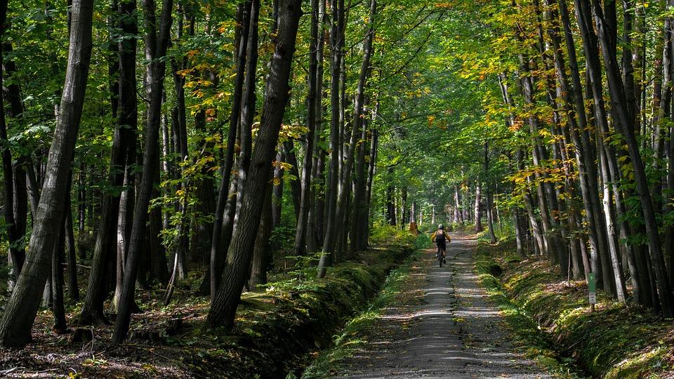 Sport, Bike, Enduro, Forest, Extreme, Biker, Nature