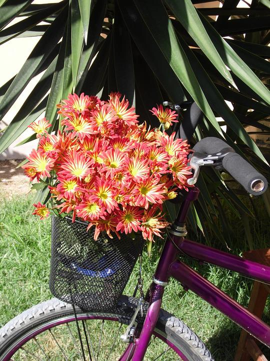 Bike, Flowers, Basket