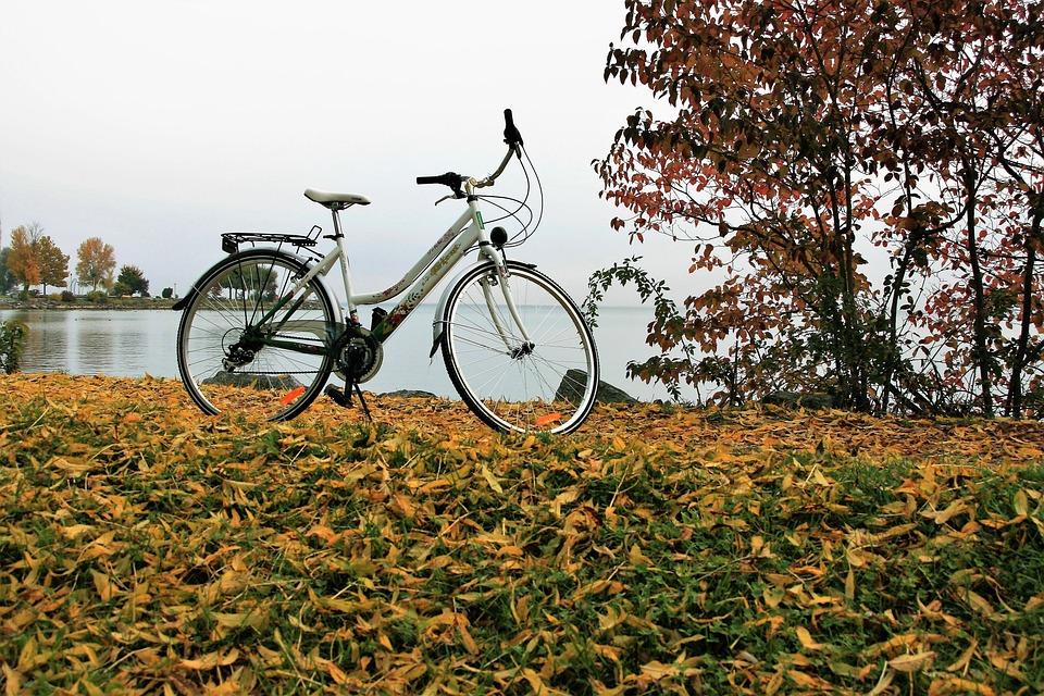 Yellow Leaves, Autumn, Bike, Lake, Bodensee, Morning