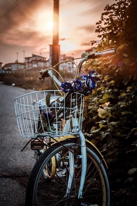 Bicycle, Bike, Sun, Flower, Old, Nature, Yellow, Street