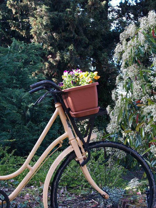 Bicycle, Flowers, Scenic, Bike, Summer, Basket, Happy