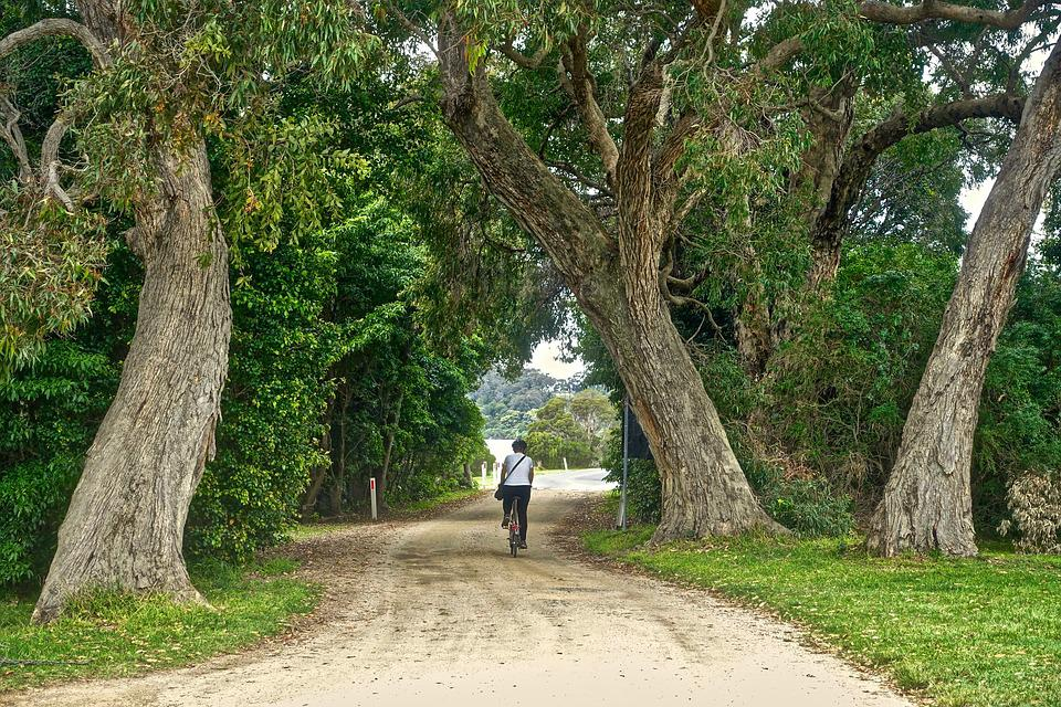 Path, Rider, Cyclist, Freeride, Biking, Leisure, Cycle