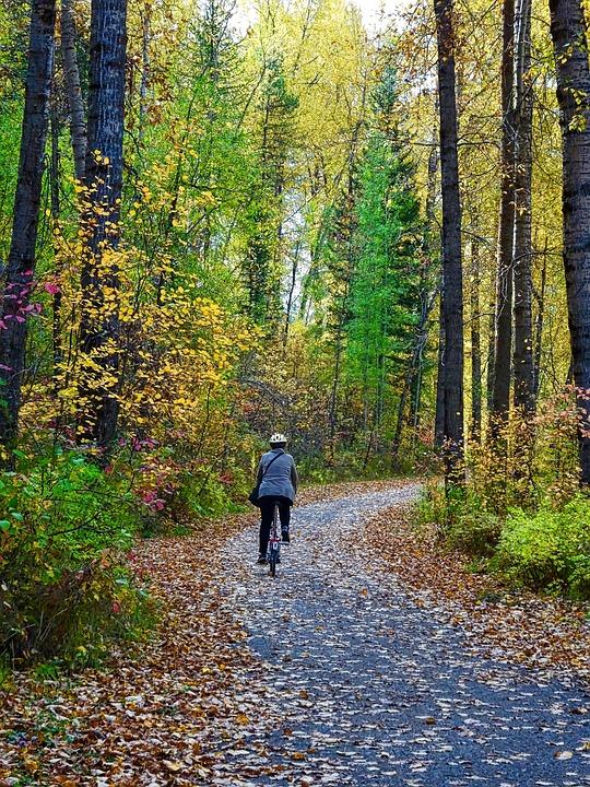 Autumn, Leaves, Forest, Trail, Biking