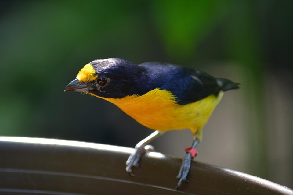 Bird, Animal World, Animal, Bill, Peipmatz, Nature