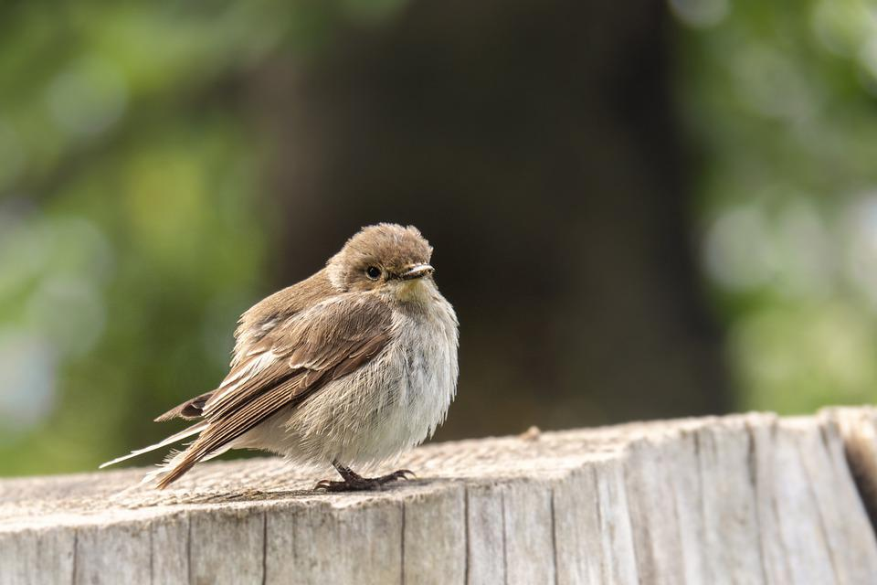 Bird, Sparrow, Feathers, Beak, Bill, Bird Watching, Ave