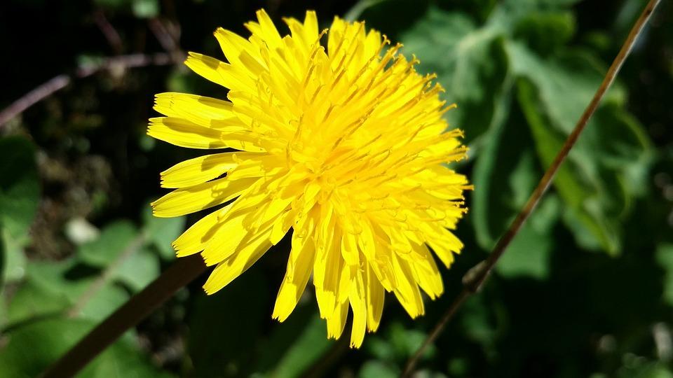 Biodiversity, Navarrevisca, Flowers