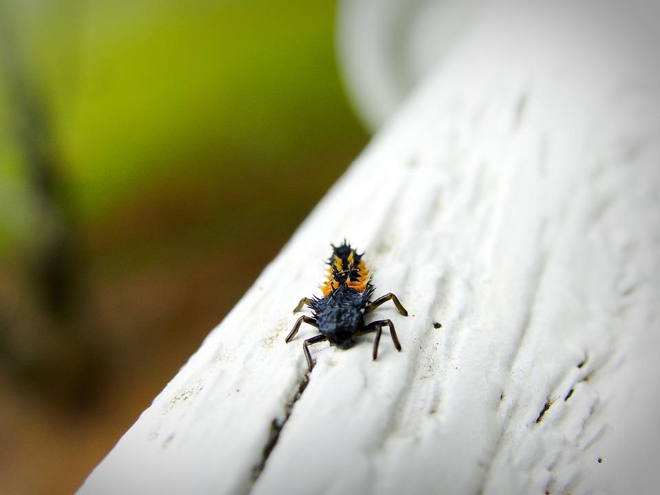 Insect, Garden, Creepy, Fauna, Biology, Pest, Bug