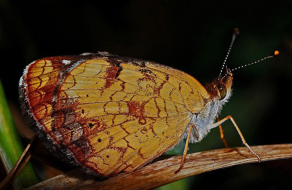 Butterfly, Macro, Insect, Nature, Biology, Animal