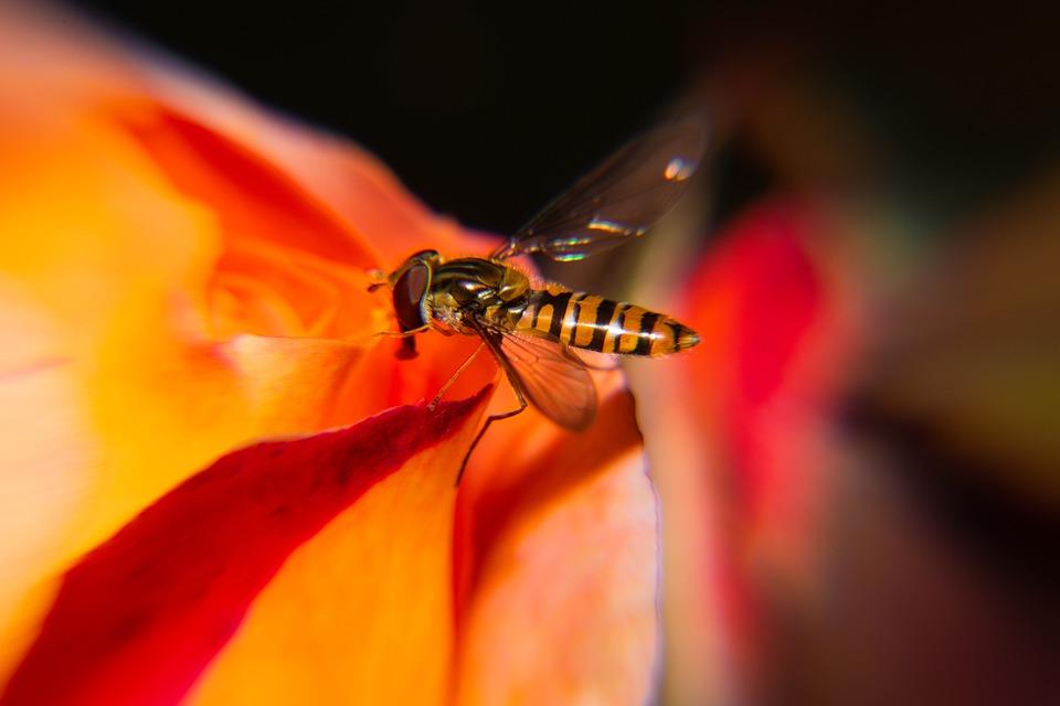 Biology, Fly, Animal, Closeup, Wasp, Nature, Orange