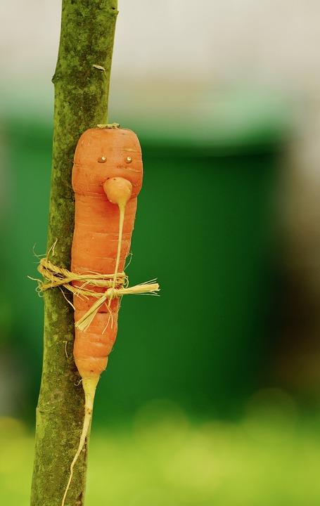 Carrot, Bio, Biotonne, Vegetables, Garden, Harvest