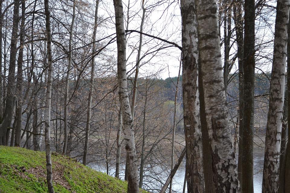 Birch, Spring, Nature, Landscape, Russia, April