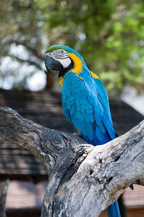 Parrot, Africa, Bird, Nature, Animal, Wild, Colorful