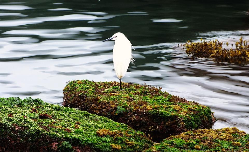 Heron, Bird, Hai Bian, Landscape, Algal Reef, Taiwan