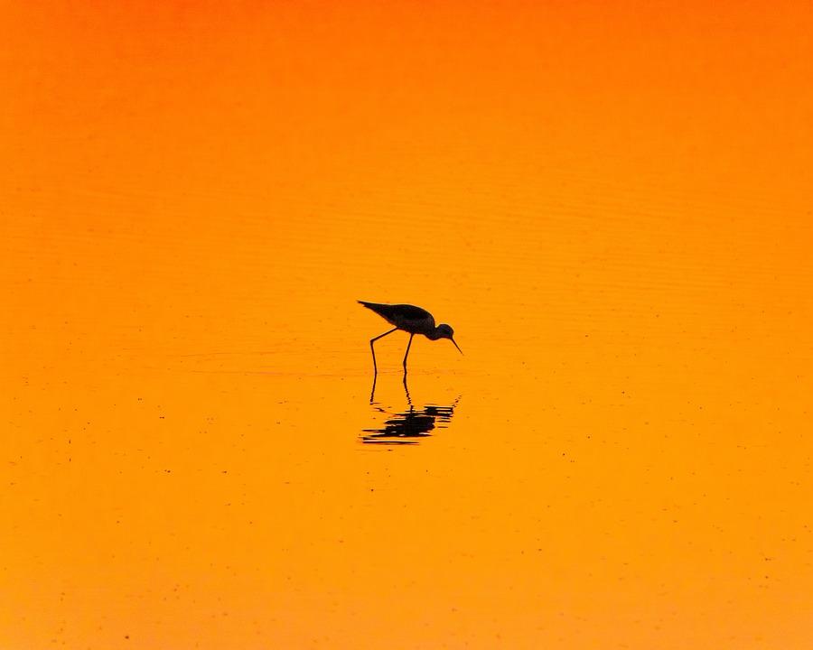 Bird, Lake, Evening, Pond, Sunset, Ambience, Mood