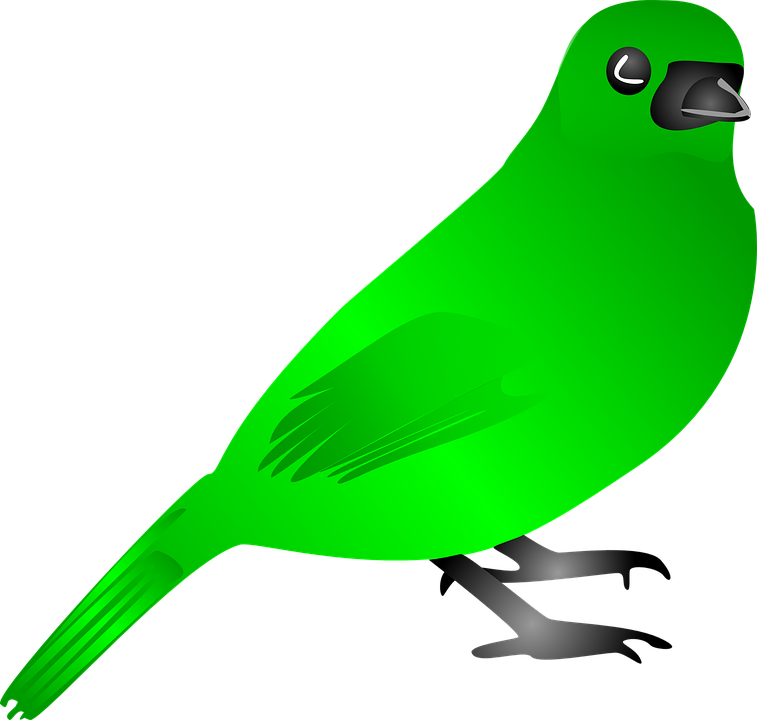 Animal, Bird, Fly, Nature, Wing, Green
