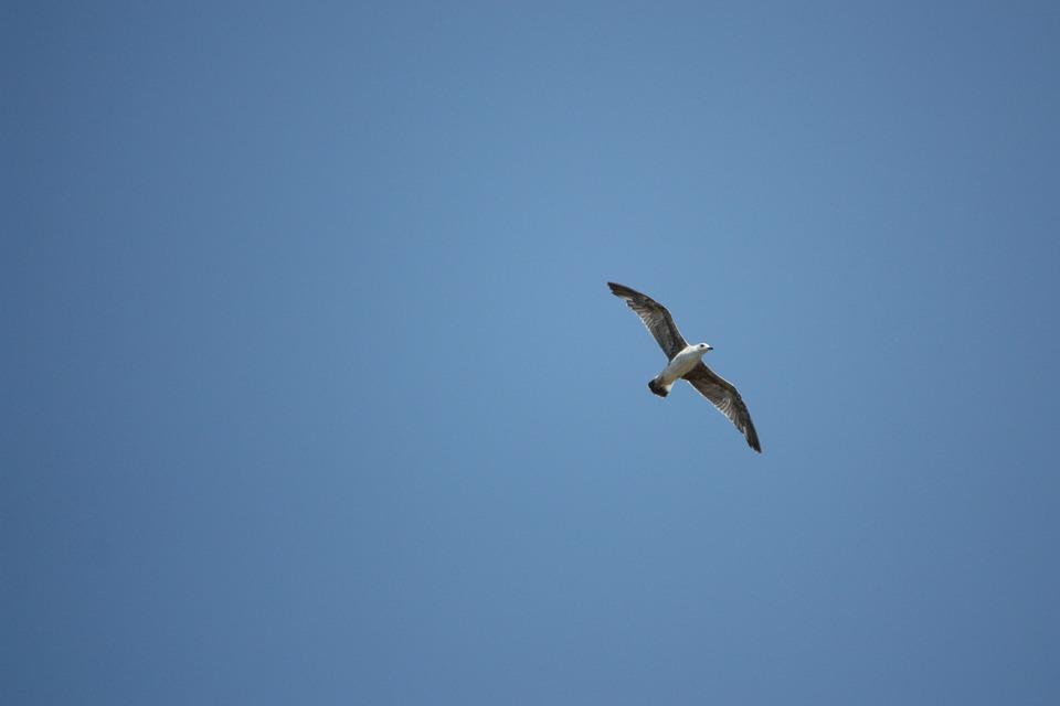 Bird, Sky, Gull, Animal, Profile, Port, Coast