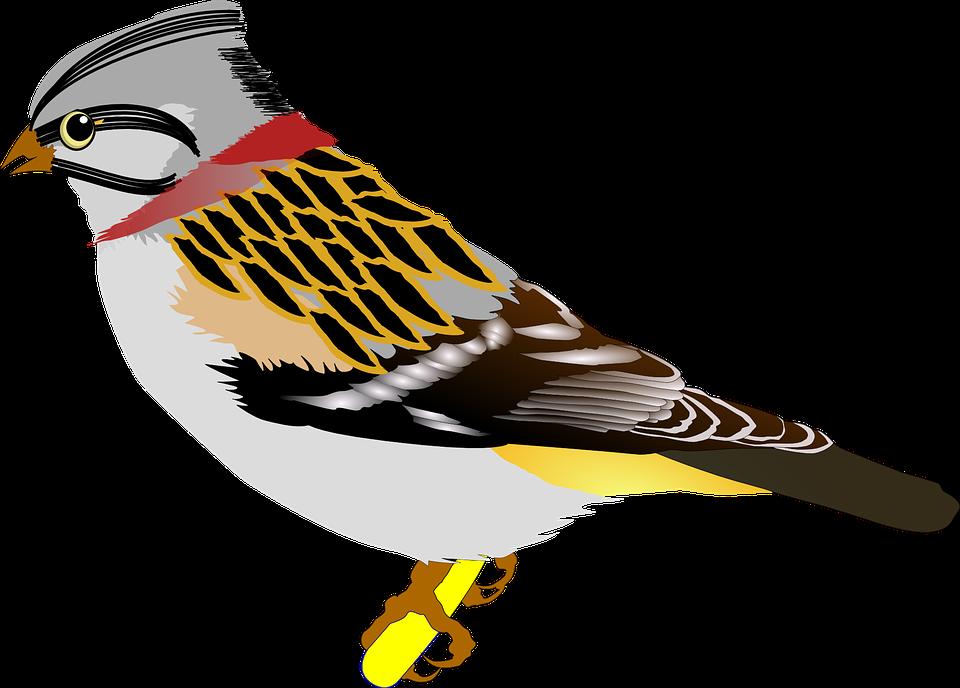 Bird, Sparrow, Ave, Animal