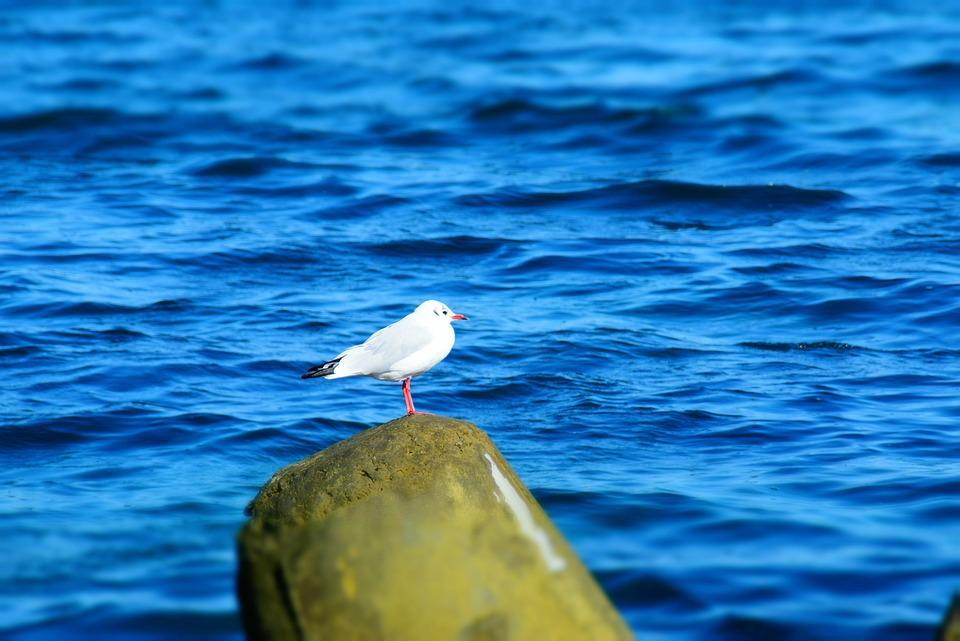 Gull Bird Sea Stone Natural Beauty Birds Animal