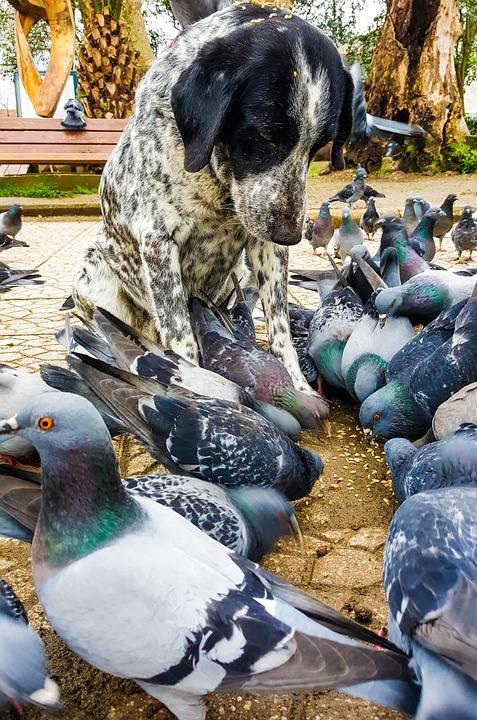 Dog, Pigeon, Animal, Bird, In Background, Day, Tree