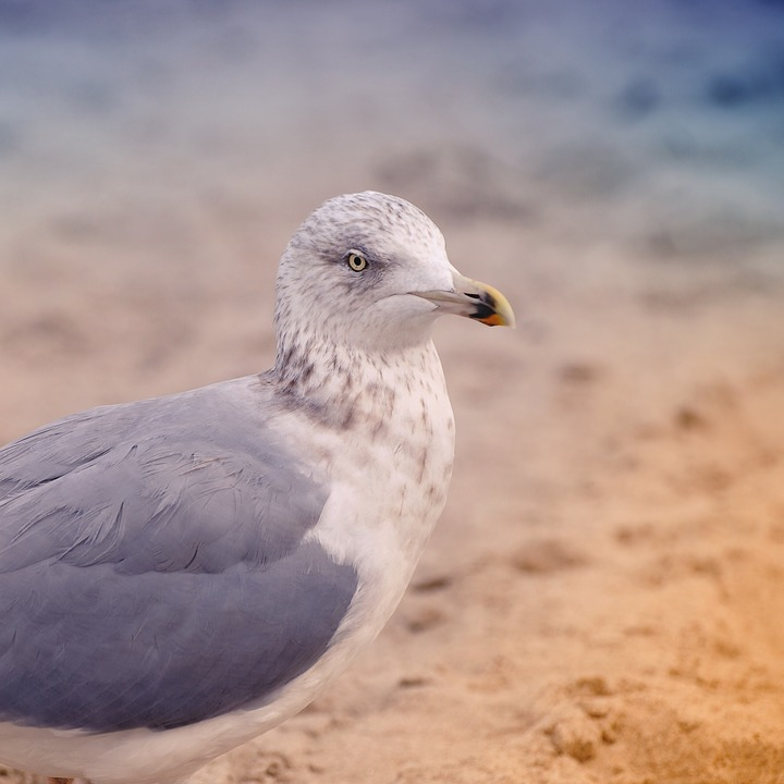 Bird, Nature, Animal World, Sea, Seagull, Animal