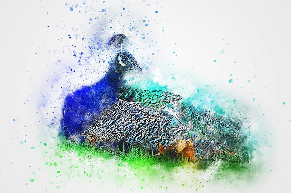 Bird, Peacock, Animal, Art, Abstract, Watercolor
