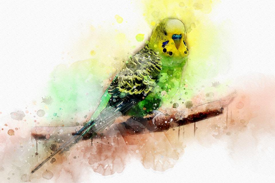 Watercolor, Art, Painting, Bird, Parrot