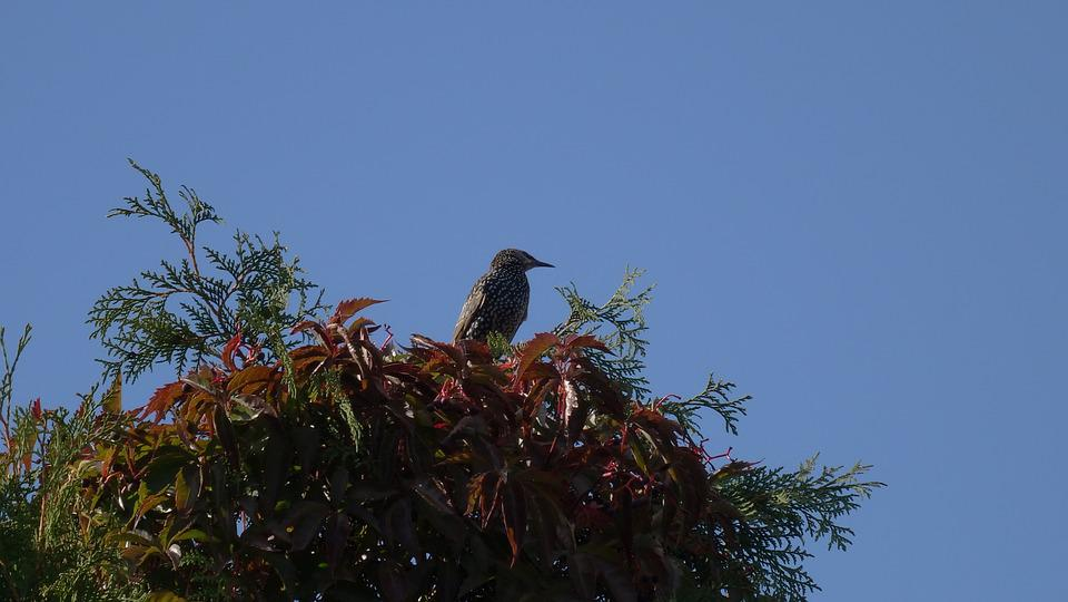Starling, Bird, Autumn, Nature