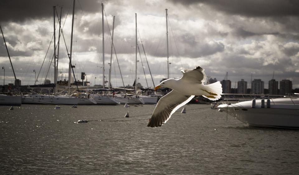 Bird, Seagull, Ave, Beach, Wings, Sky, Sea, Cloudy