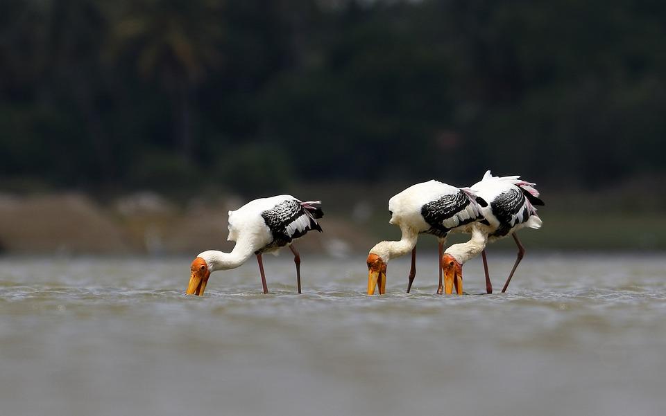Aves, Wildlife, Bird, Fauna, Nature, Avian, Avifauna