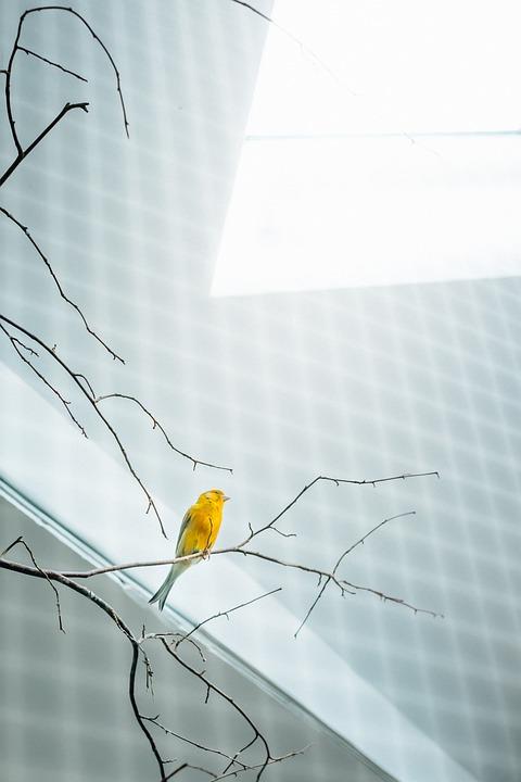 Bird, Yellow, Cage, Bird Cage, Aviary, Sun