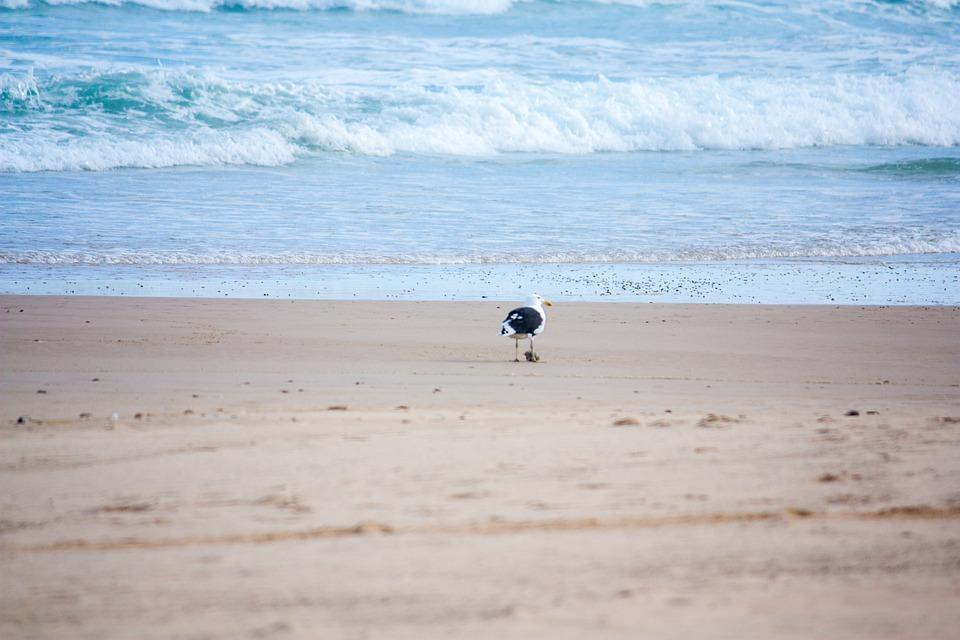 Beach, Bird, Ocean, Seagull, Nature, Water, Sand