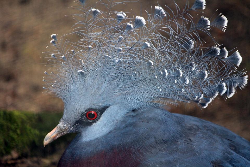 Magnificent Bird, Bird Of Paradise, Bird Beauty