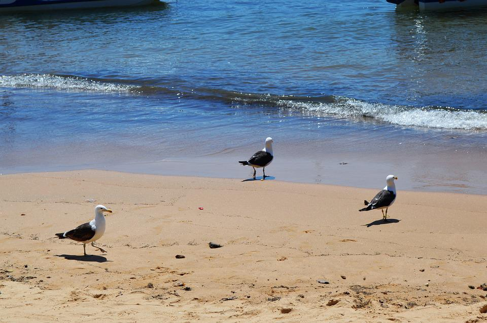 Beach, Mar, Beira Mar, Nature, Sand, Bird, Waves, Boat