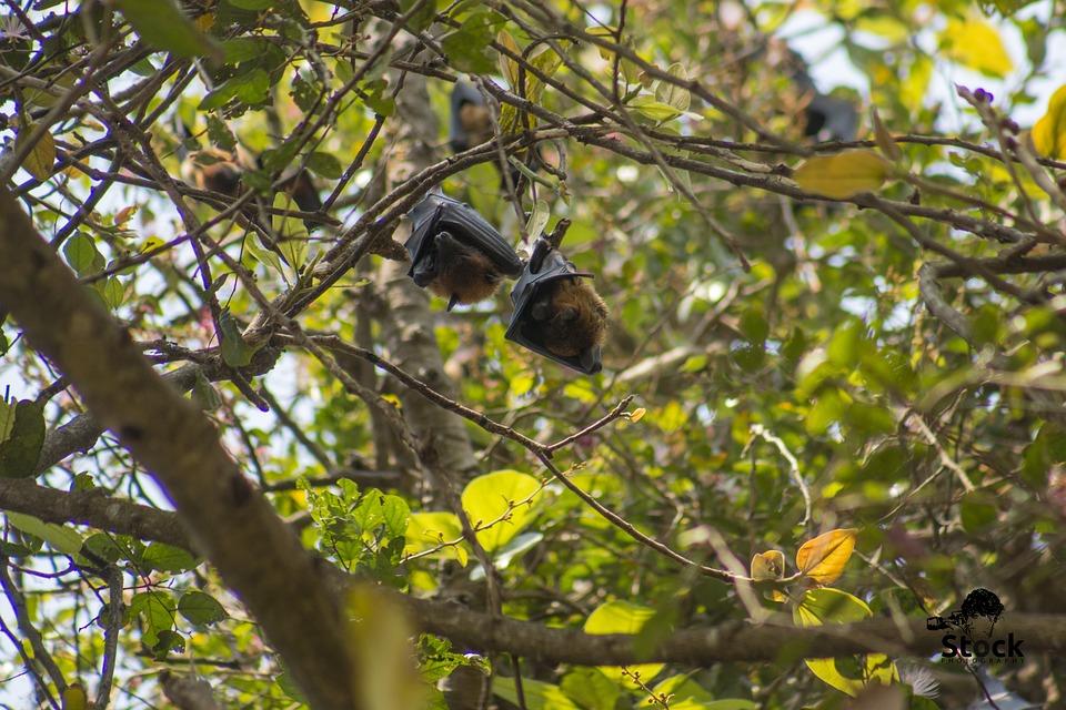 Between Bats Bird 9265, Between Bats Bird, Bird, Tree