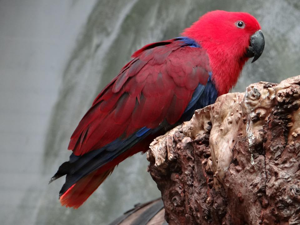 Barwnica Large, Parrot, Bird Colorful, Bird, Colored