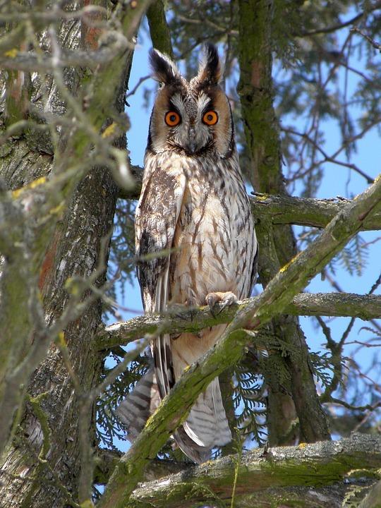 Bird, Owl, Bird Of Prey