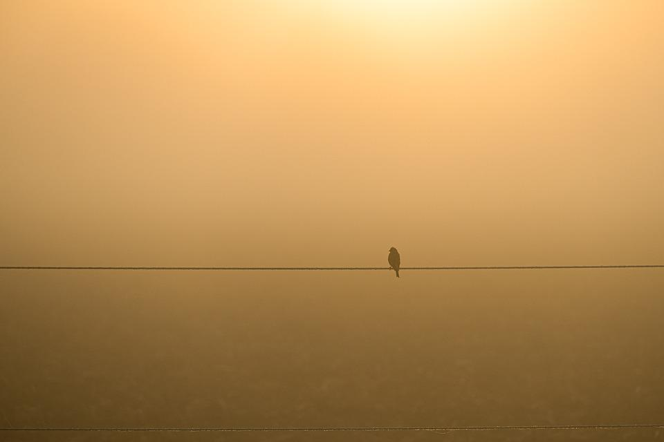 Bird, Perched, Bird Perched On A Wire, Haze, Sit
