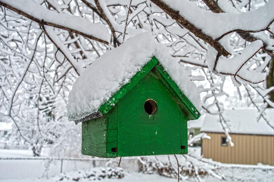 Snow, Winter, Contrast, Bird, Birdhouse, Bird House