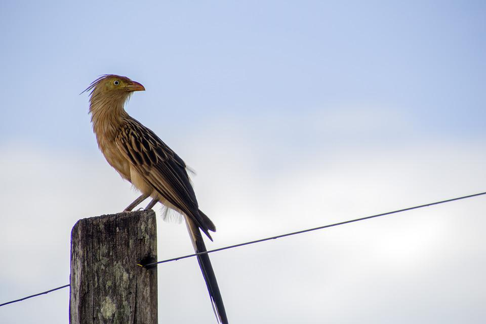 Nature, Birds, Outdoors, Wildlife, Anu-white, Bird