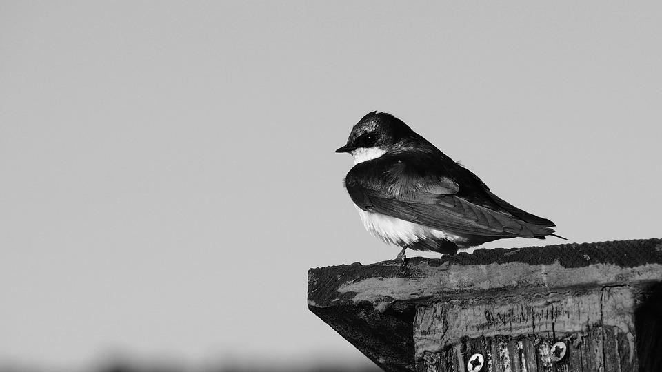 Bird, Side Profile, Black And White, Animal, Wildlife